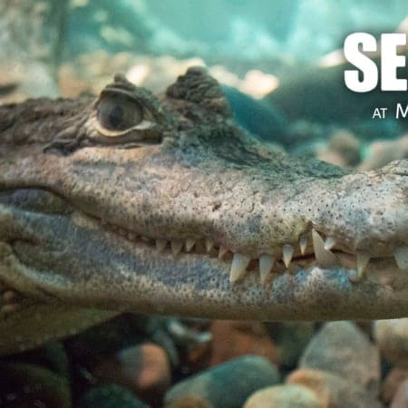 SEA LIFE AT MALL OF AMERICA | Dive Beneath the Ocean with your next event!