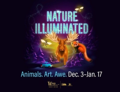 MN ZOO | NATURE ILLUMINATED. Animals. Art. AWE.